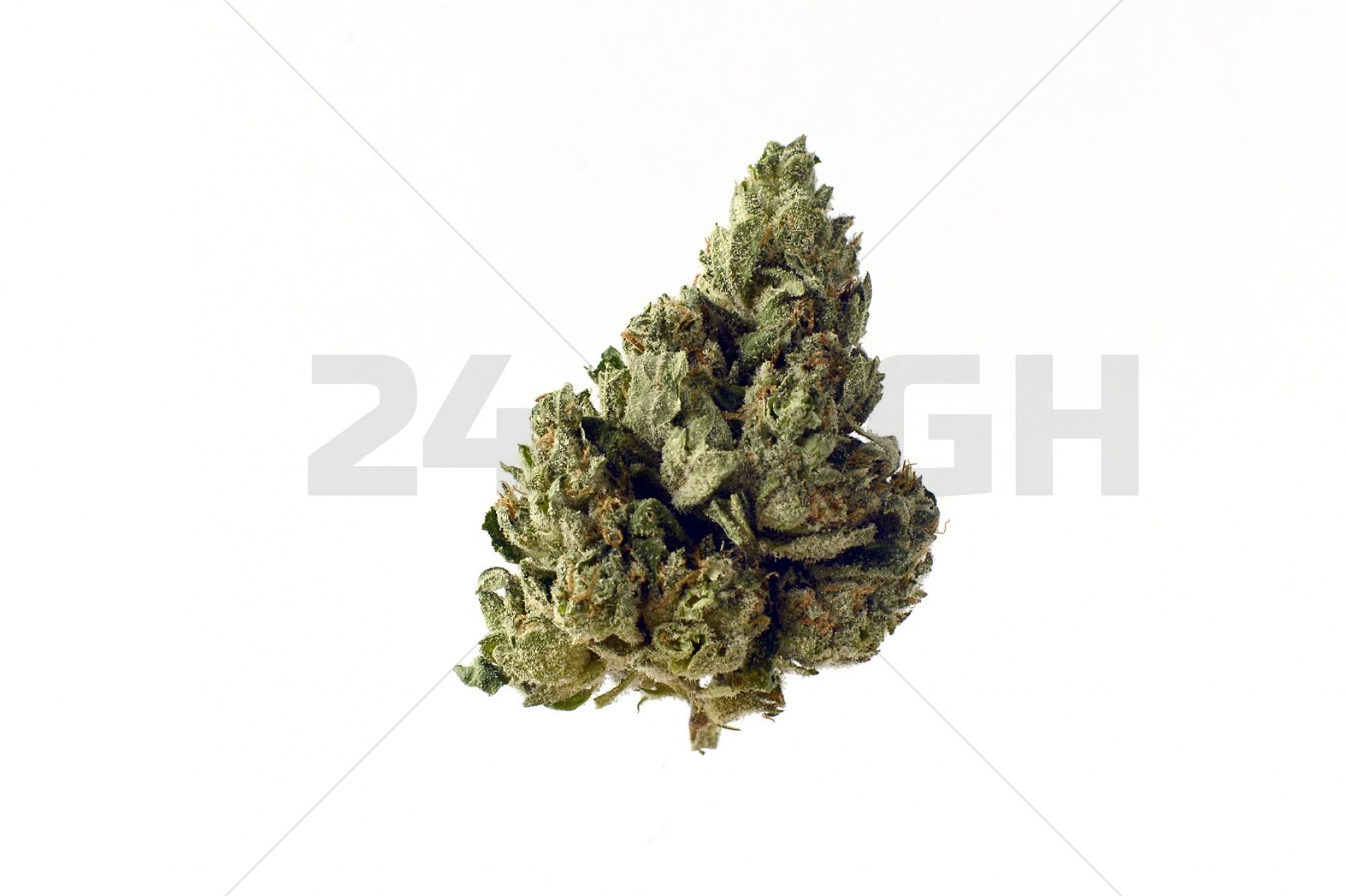 Choco Kush Autoflower (Amsterdam Genetics) Feminized