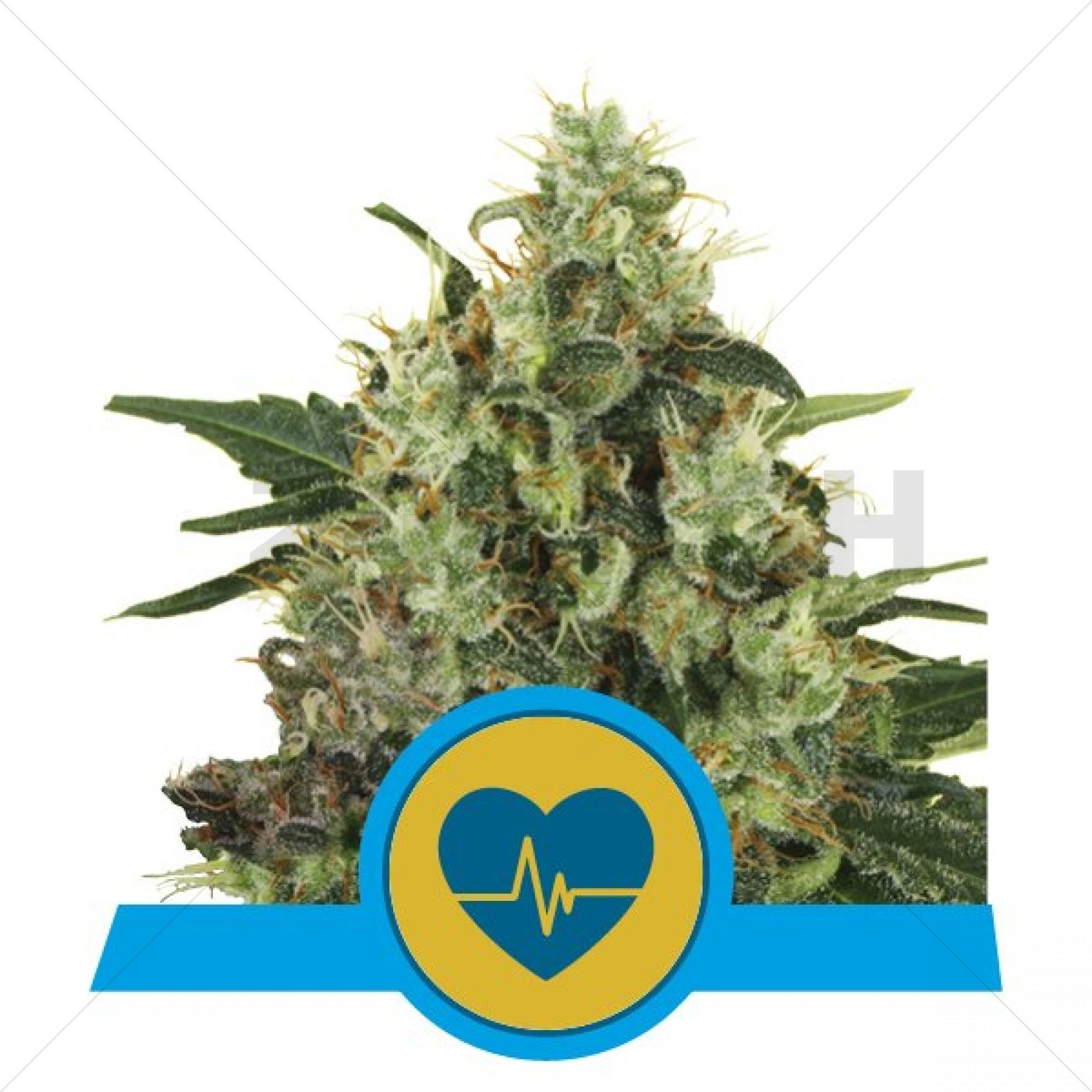 Medical Mass