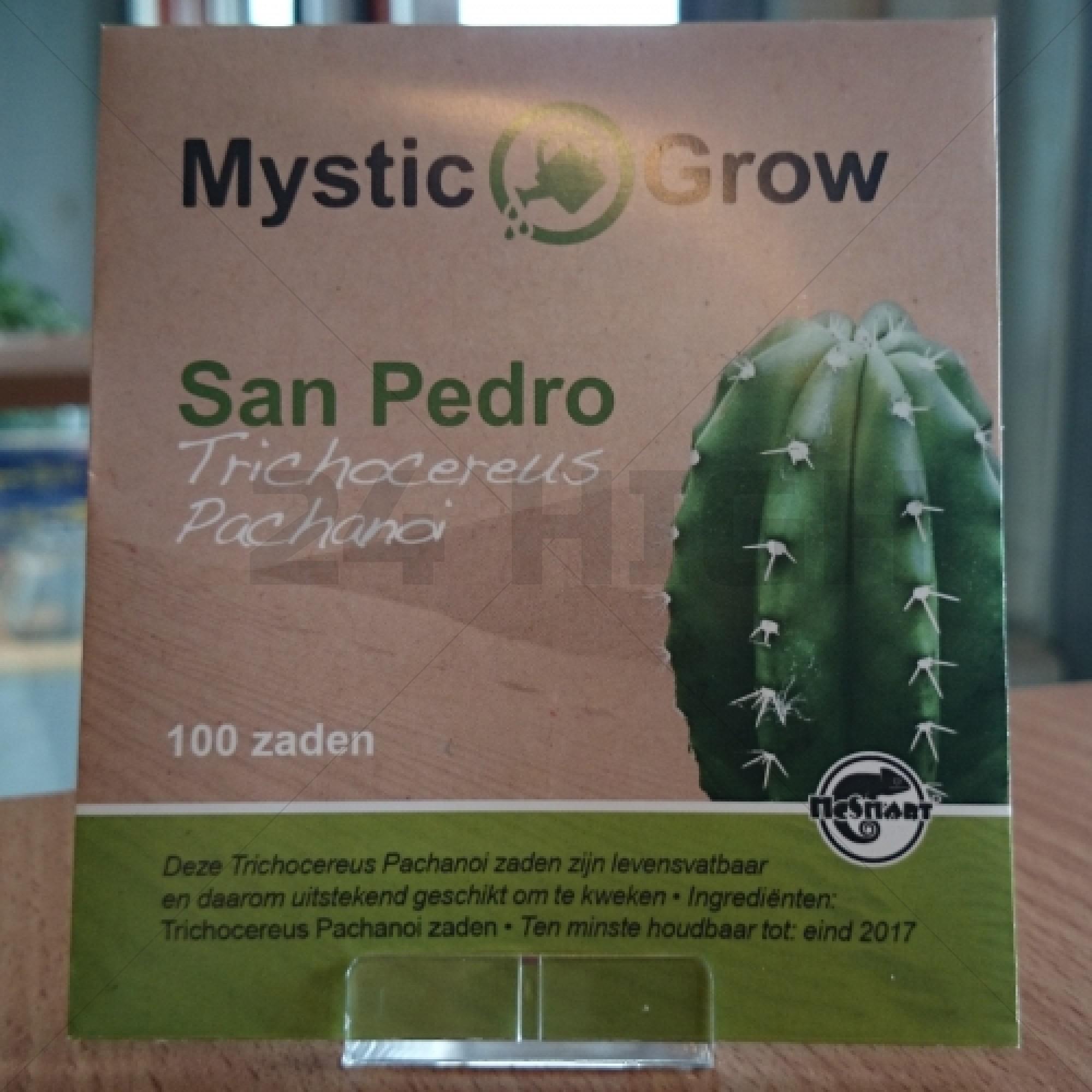 San Pedro seeds (Trichocereus Pachanoi)