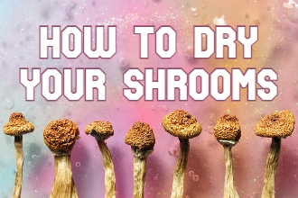 THE BEST WAY TO DRY YOUR MAGIC MUSHROOMS